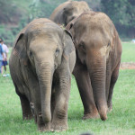 Volunteering at Elephant Nature Park in Thailand