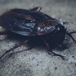 Thailand: Woman vs Cockroach