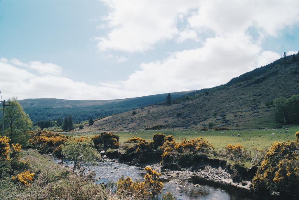 county wicklow photos, ireland photography, gorse ireland