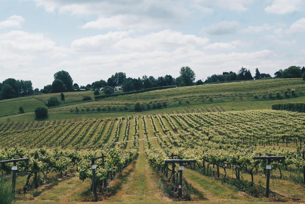 british wine, three choirs vineyard, english vineyard