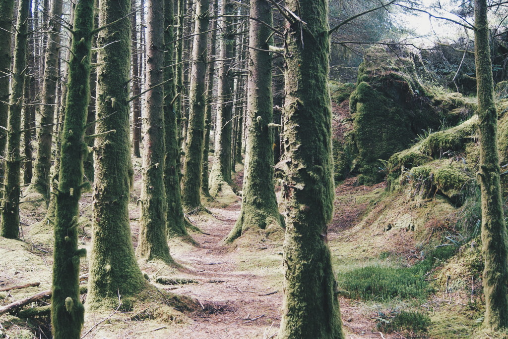 ireland forests, west cork, ireland photos