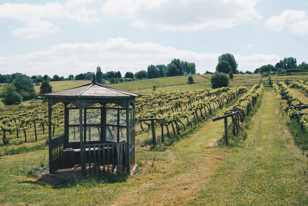 vineyards england, british wines, three choirs gloucestershire