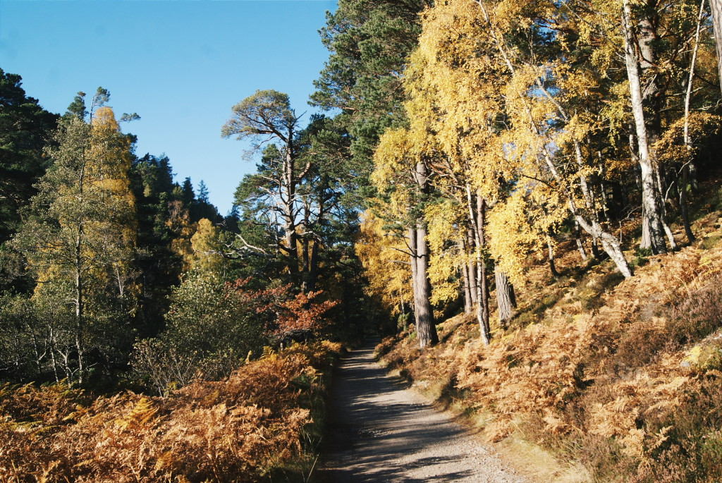 cairngorms national park in autumn, cairngorms photos, scotland autumn