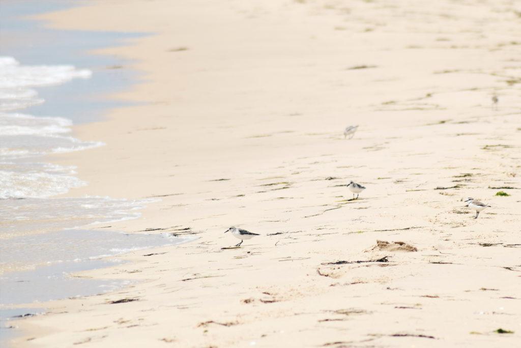 birds in ria formosa, guide to ria formosa natural park