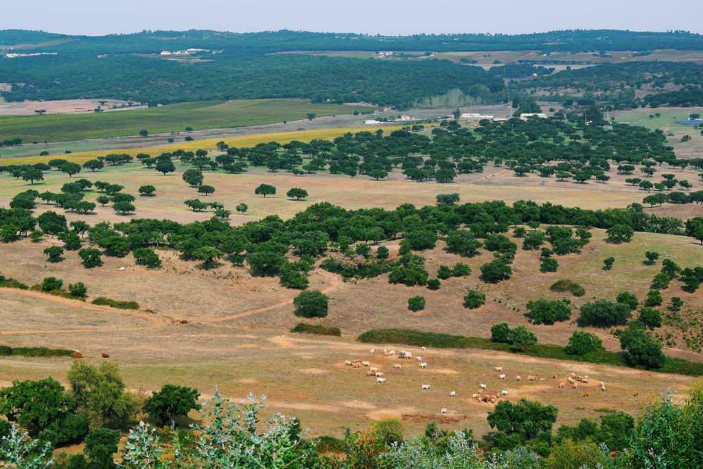 alentejo hiking, hikes near evora, portugal walking