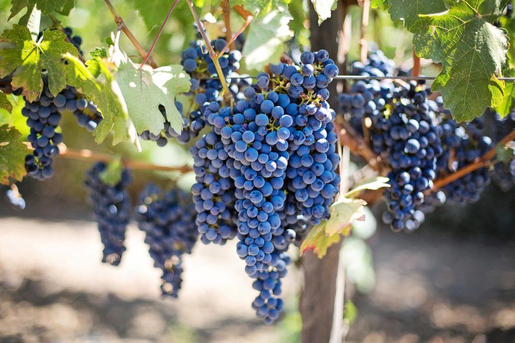 weekend in evora, evora guide, evora wine